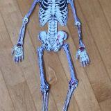 Bio_Skelette_20_21_2