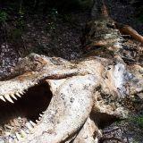Dinopark--4